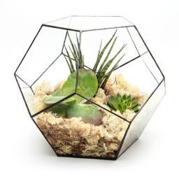 supersize-penta-terrarium@2x.jpg