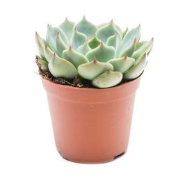 potted-succulent.jpg