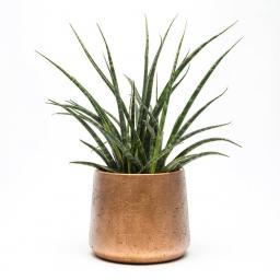 copper-planter.jpg