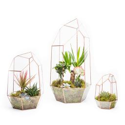 COPPER-MEGA-GEM-TERRARIUM-TRIO-ON-WHITE-TRIO-CGEM-1.jpg