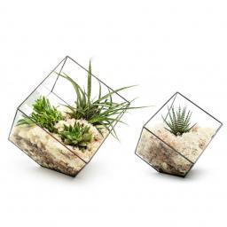 duo-cube-terrarium@2x-e1560779162601.jpg