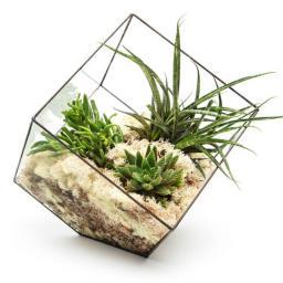 supersize-cube-terrarium@2x.jpg