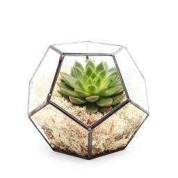 aztec-penta-terrarium@2x.jpg