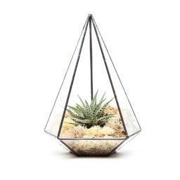 aztec-jewel-terrarium@2x.jpg