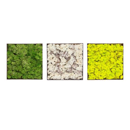 moss-box-trio.jpg