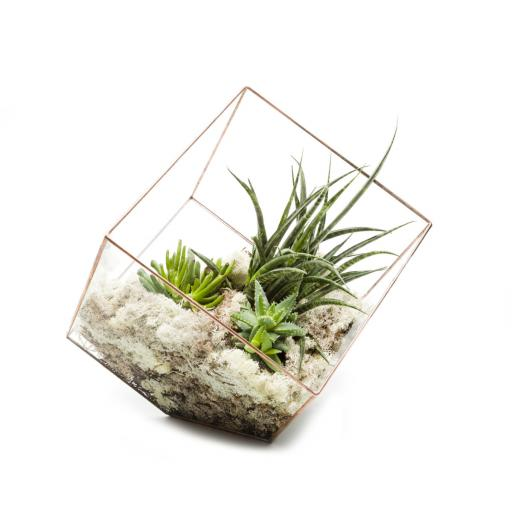 Supersize Copper Cube Terrarium
