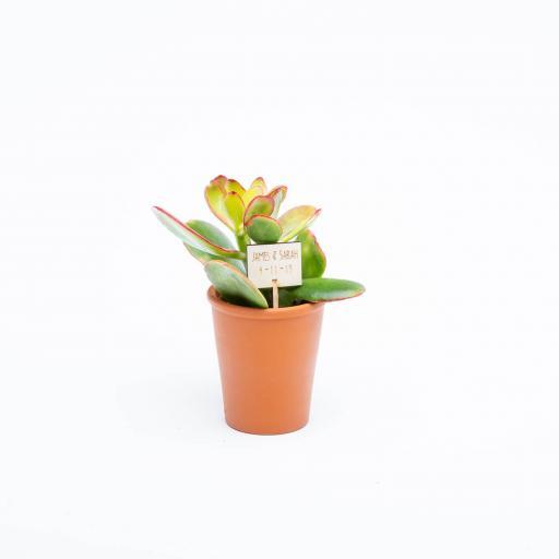 Urban-Botanist-2019-054.jpg