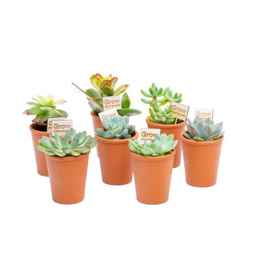 3cm Succulent Terracotta Pots