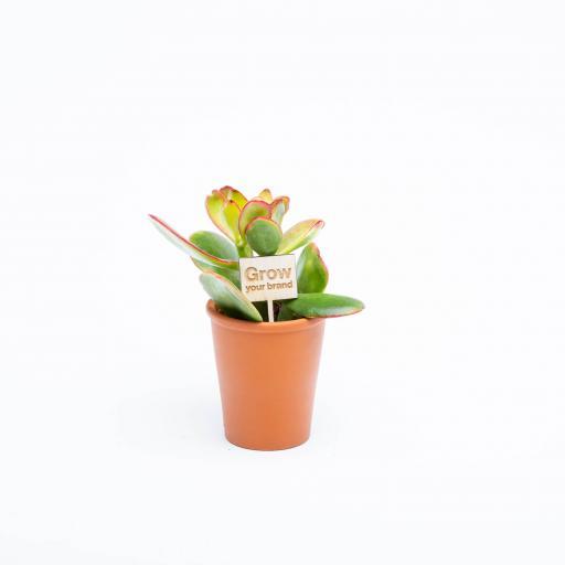 Urban-Botanist-2019-057.jpg
