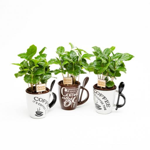Coffee Cup & Arabica Plant