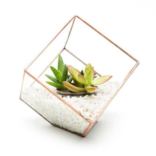 Mini Copper Cube Terrarium White