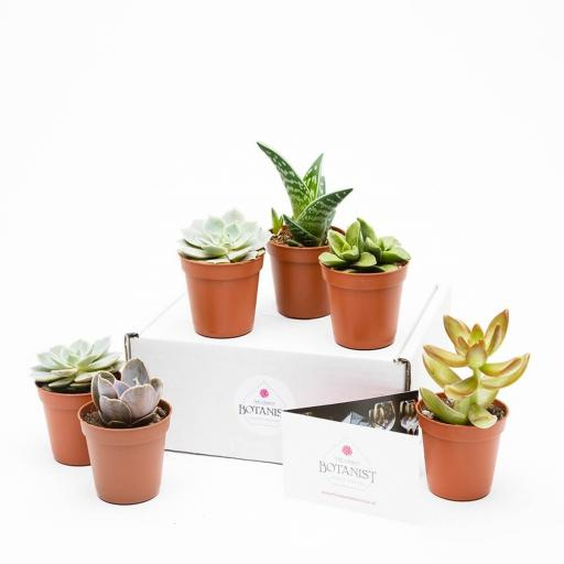 mini-succulent-collection-six.jpg