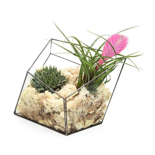Supersize Aztec Diamond Terrarium