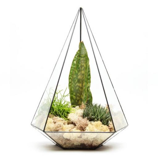Supersize Aztec Jewel Terrarium