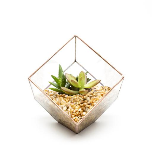 Mini Copper Cube Terrarium