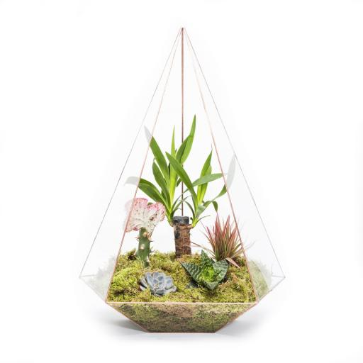 Mega Copper Jewel Terrarium