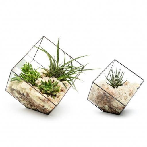 Duo Cube Terrarium