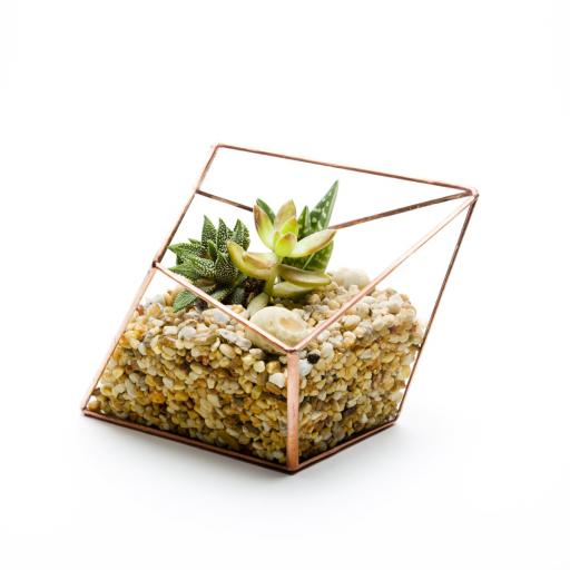 Copper Diamond Terrarium