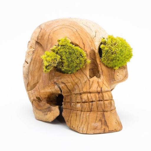 moss-skull.jpg