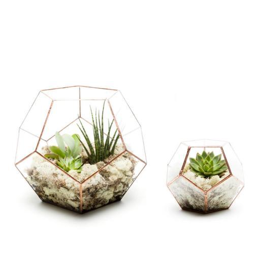 Duo Penta Terrarium