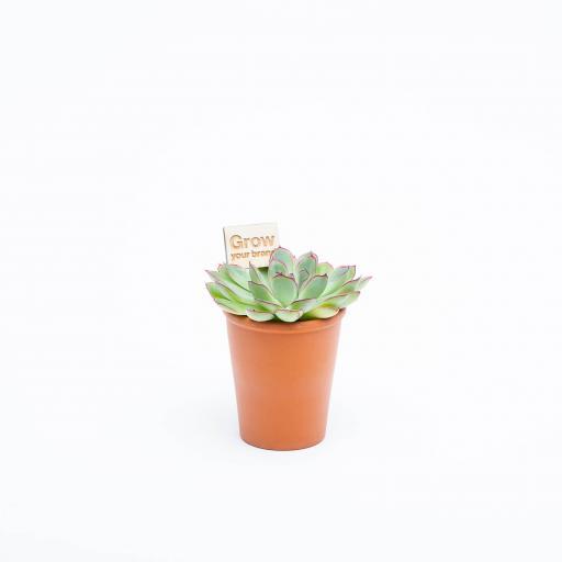 Urban-Botanist-2019-056.jpg