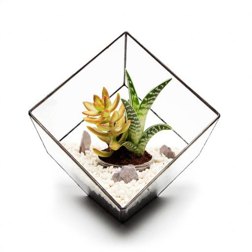 Father's Day Aztec Cube Terrarium