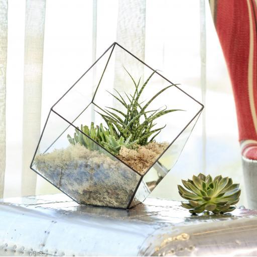 Supersize Aztec Cube Terrarium