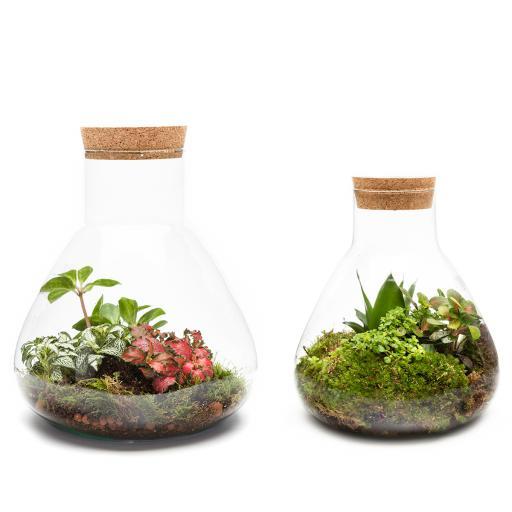DIY Duo Baby & Petite Ecosystem Kit