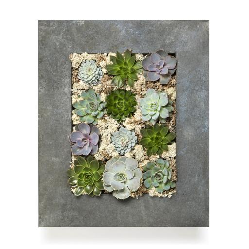 Grand Living Wall Succulent Planter