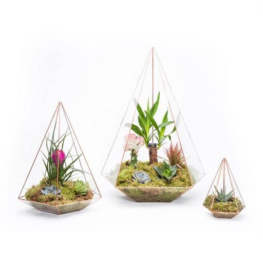trio-jewel-terrarium@2x.jpg