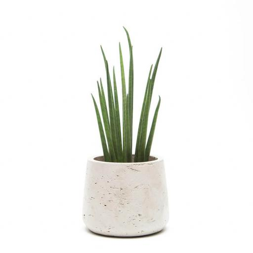 Stone Planter with Sansevieria