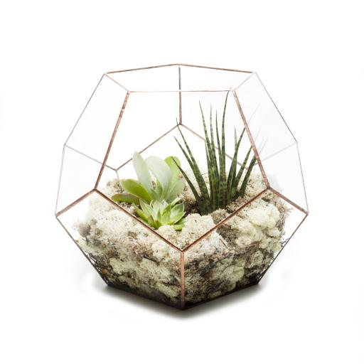 Golden Wedding Anniversary Supersize Copper Penta Terrarium