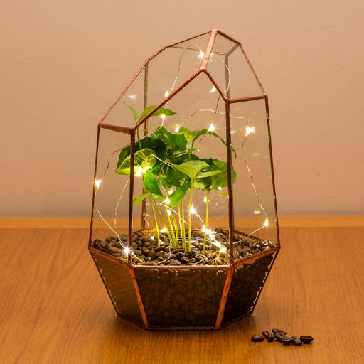 COPPER COFFEE GEM TERRARIUM - CGEMCOFF.jpg