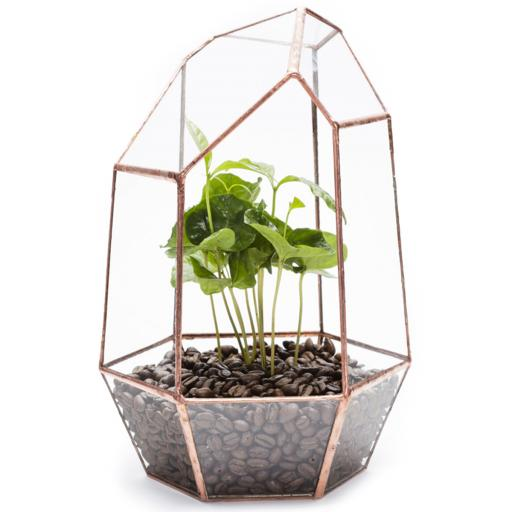 Copper Coffee Gem Terrarium