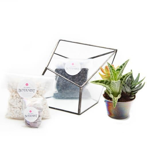 DIY Aztec Diamond Terrarium Kit