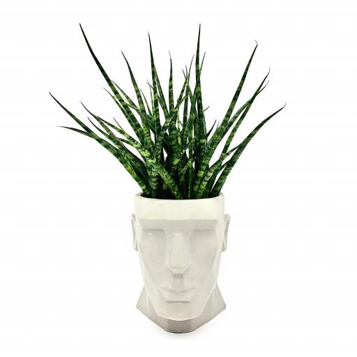 Men's Head Planter with Sansevieria