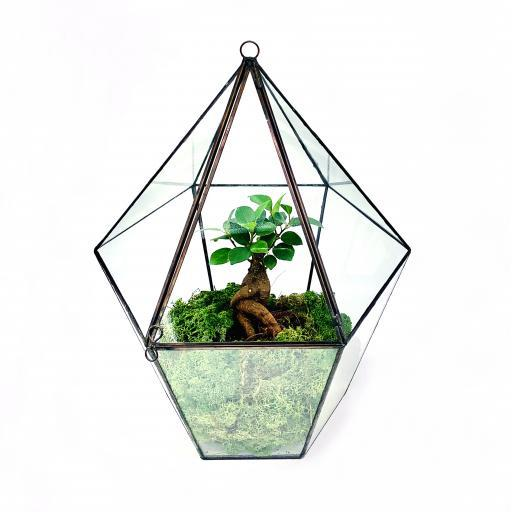 Mini Bonsai Tree Lantern