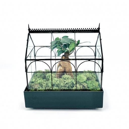 Limited Edition Wardian Bonsai Greenhouse