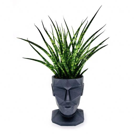 Women's Head Planter with Sansevieria