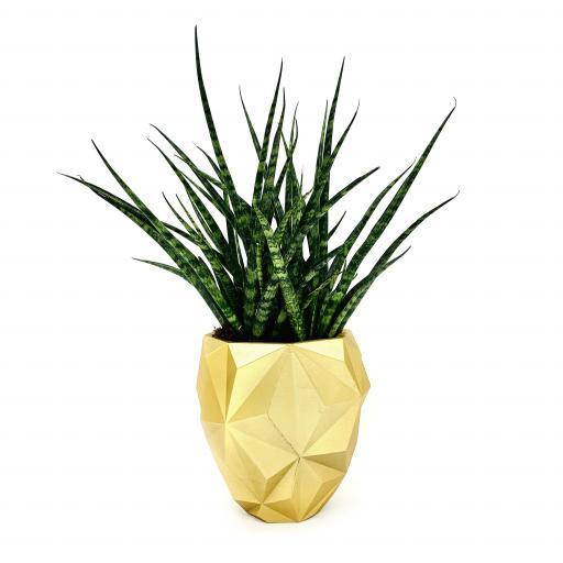 Geometric Planter with Sansevieria