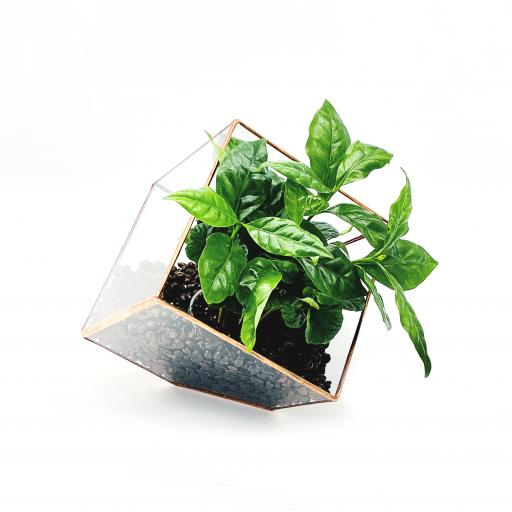 Copper Coffee Cube Terrarium
