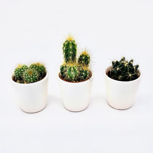 Cacti Quarterly Subscription