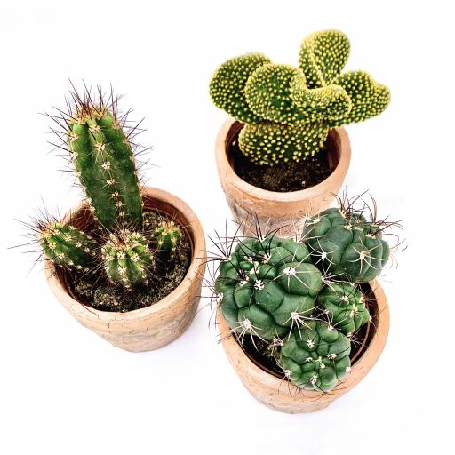 Cacti Yearly Subscription