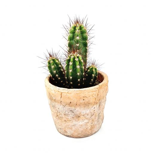 Cacti Monthly Subscription