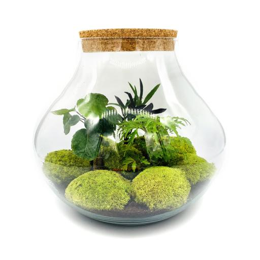 Limited Edition Secret Garden Ecosystem