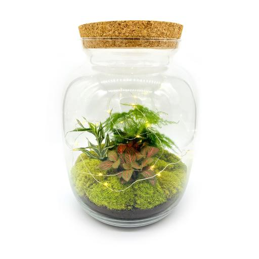 Limited Edition Biome Ecosystem
