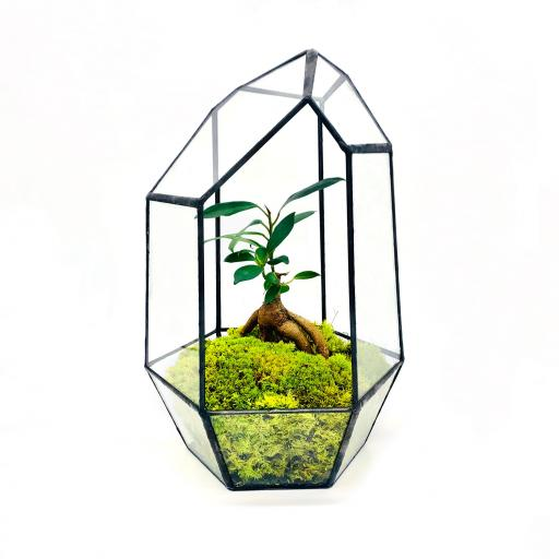 Aztec Gem Bonsai Tree Terrarium