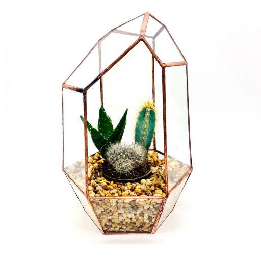 Copper Gem Cacti Terrarium