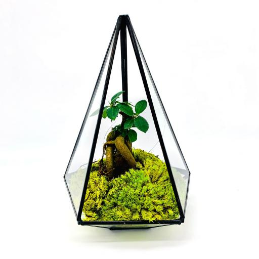 Aztec Jewel Bonsai Tree Terrarium