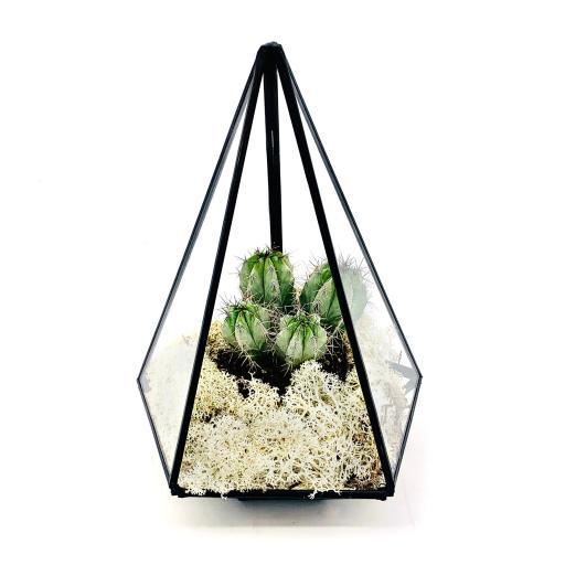 Aztec Jewel Cactus Terrarium
